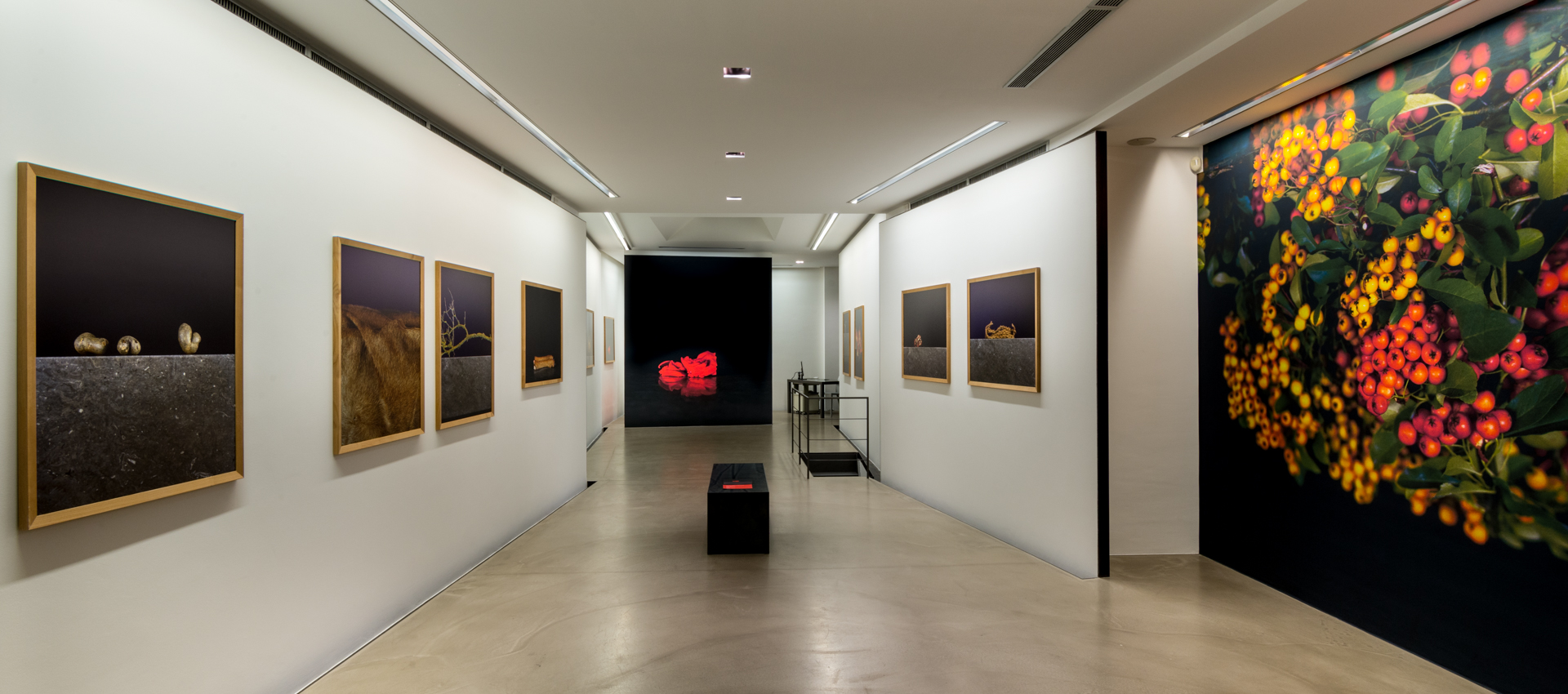 Antonella Cattani galleryview